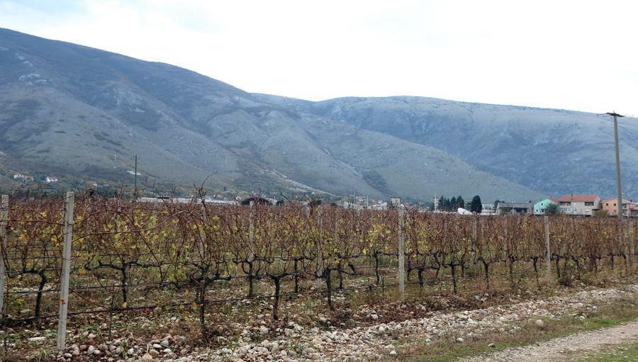 Teška nesreća: U vinogradu kod Karlovca prevrnuo se traktor, POGINUO MUŠKARAC