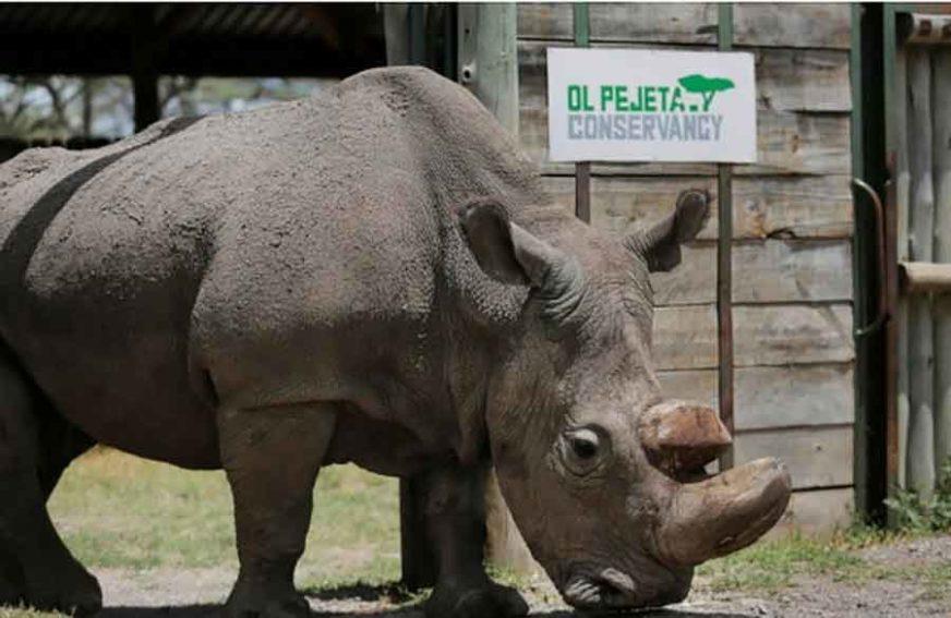 PAS NANJUŠIO POŠILJKU Pronađeni rogovi nosoroga vrijedni 1,7 miliona dolara