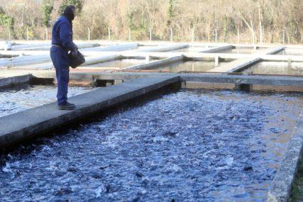 Pomor umalo izazvao EKOLOŠKU KATASTROFU: Iz prnjavorskog ribnjaka počelo uklanjanje uginule ribe