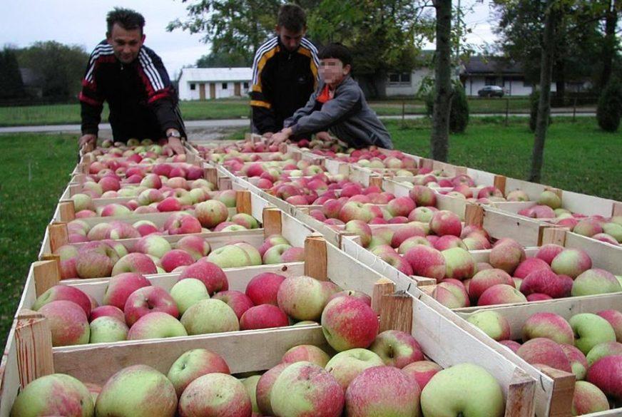 IMA RAZLOGA ZA OPTIMIZAM Rekordan rod jabuke, višnje i trešnje
