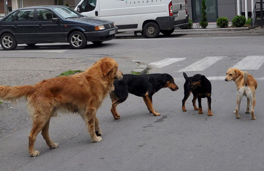 UŽAS U MOSTARU Tri psa izgrizla šestogodišnjeg dječaka, a sve se odigralo na dječjem igralištu