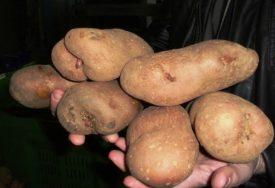 ZNAK ZAHVALNOSTI Agrarni fond donirao bolnici 1,5 tona krompira