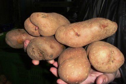 KONAČNO NAĐEN KUPAC Tone krompira mjesecima stajale na lageru