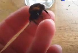 LJETO DONOSI I NEUGODNOSTI Ovaj trik koji će vam pomoći nakon uboda pčele ili ose