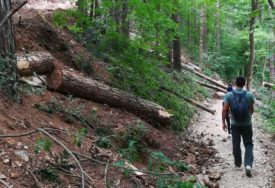 Staze na Banj brdu devastirane poslije izvlačenja porušenih stabala
