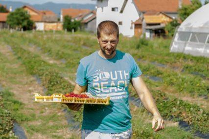 SLATKI GEST PROIZVOĐAČA VOĆA Prijedorčanin sugrađanima podijelio 300 kilograma jagoda, ima samo JEDAN USLOV