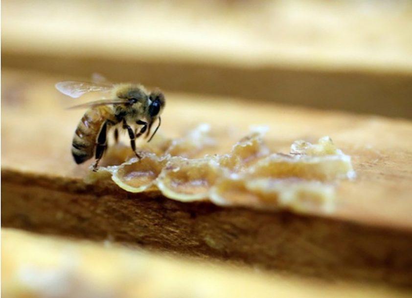 ZADOVOLJNI TRLJAJU RUKE Odlična godina za hercegovačke pčelare