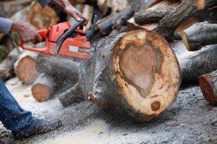 OSUMNJIČENI ZA PET KRAĐA Bespravnom sječom šume pričinili štetu od 5.700 KM