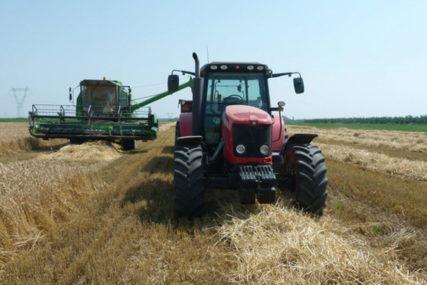 Očekuje nas smanjeni prinosi i kvalitet hljebnog žita: Pšenice zbog kiše ostala bez zaštite