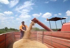 LOŠE VRIJEME Ove godine manja proizvodnja pšenice u Srpskoj