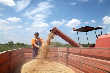 Najveći problem loše vrijeme i nedovoljni podsticaji: Proizvodnja pšenice u Srpskoj ZNAČAJNO PADA
