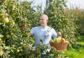 NE VALJA NI KAD REKORDNO RODI Zbog manjka ambalaže trećina voća može da propadne