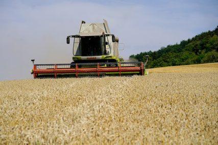 Žetva u Šamcu: Rod pšenice od 4,5 tona po hektaru