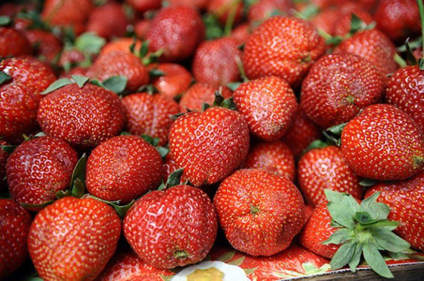 NE MOŽEMO SE BRANITI OD PESTICIDA Zabranjen uvoz 2.560 kilograma jagoda iz Grčke