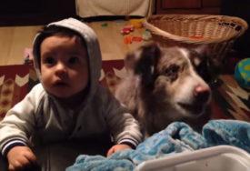 LJUBIMAC OBORIO S NOGU Žena nagovarala sina da kaže MAMA pa PLAKALA OD SMIJEHA kada je to uradio PAS (VIDEO)