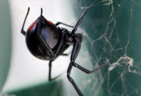 IZVOR INSPIRACIJE Poslušajte zvuk koji se dobije kada se niti paukove mreže pretvore u muziku (VIDEO)