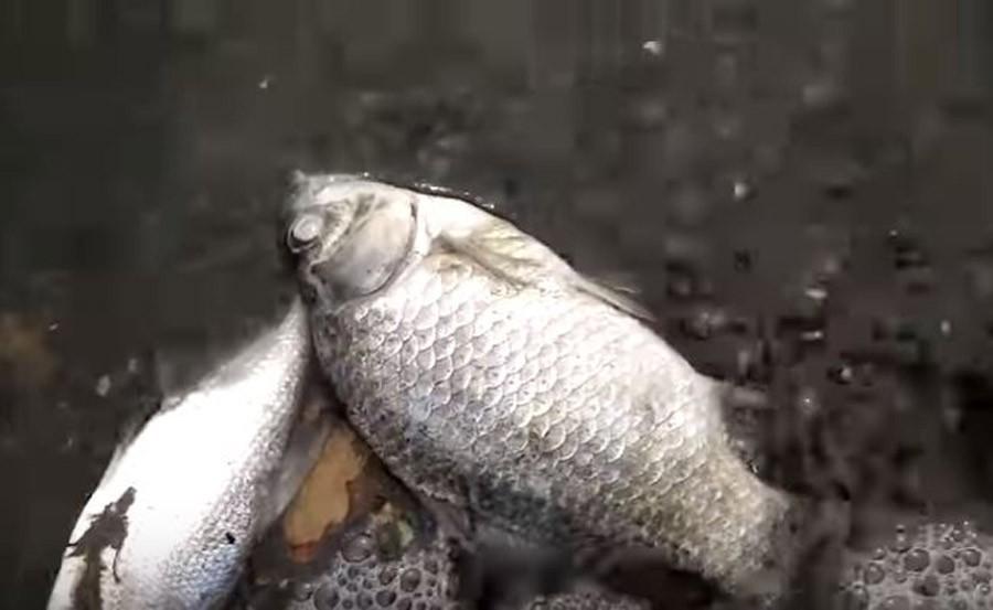 Moje mjesto za upoznavanje s ribama