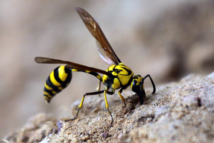 Osa czy pszczoła?   Centrum Nauki i Techniki EC1