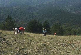 BAŠTINA ČOVJEČANSTVA Travu ivu na Ozrenu treba staviti pod zaštitu RS