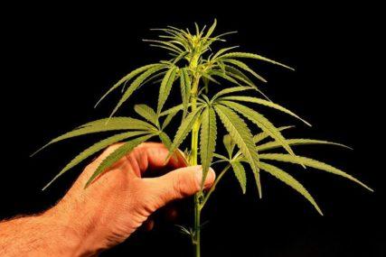 IZA REŠETAKA ZBOG DROGE Policija zaplijenila 24 kilograma marihuane i uhapsila tri osobe
