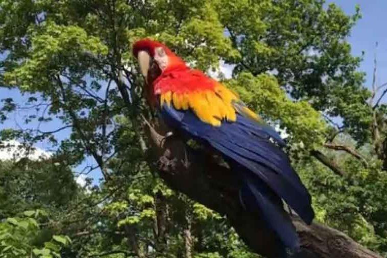 HIT NA FEJSBUKU Ples papagaja koji morate pogledati (VIDEO)