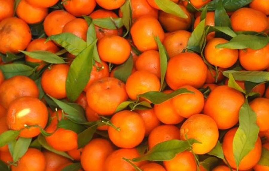 POVEĆAN SADRŽAJ PESTICIDA Zabranjen uvoz 20 tona mandarina u Srpsku iz Turske