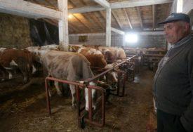 ODAVNO U PROBLEMIMA Domaći proizvođači traže da se optereti uvoz svinja i goveda u BiH