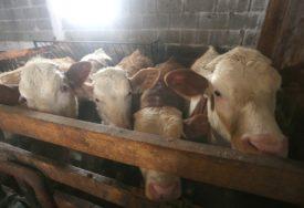 UTOVILI JUNAD, A KUPACA NI ZA LIJEK Farmeri traže hitno uvođenje carina na uvoz mesa iz EU
