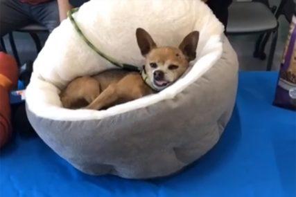 ZVJERSKI Vezao je psa za žicu, a onda ga je koristio kao loptu za fudbal (VIDEO)