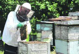 OVOME SE NIJE NADAO Uklanjao roj pčela iz zida, ali ono što je zatekao ostavilo ga je U ŠOKU