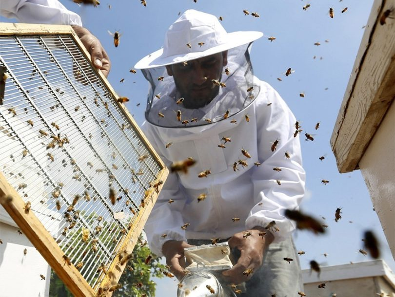 UPOZORENJE STRUČNJAKA Pčela sve manje zbog upotrebe pesticida