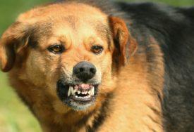 Uhapšen Beograđanin zbog izazivanja panike: Pijan vezao psa za gelender, životinja IZUJEDALA TROJE LJUDI