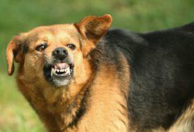 HOROR ISPRED PORODIČNE KUĆE Pas izašao iz dvorišta i povrijedio sedmoro ljudi