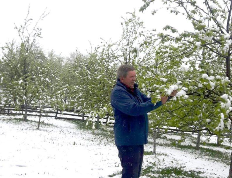 ZIMA U PROLJEĆE Uništeni voće i usjevi, štetu plaćaju sami poljoprivrednici