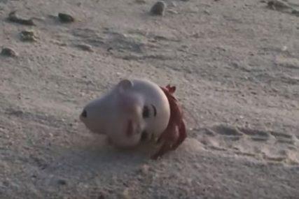 JEZIV PRIZOR Sakupljao je otpad na plaži, a ona je ugledao OVO (VIDEO)