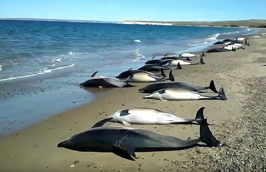 PORAŽAVAJUĆI PODACI Izumiru delfini, somovi, raže, šarani, dabrovi