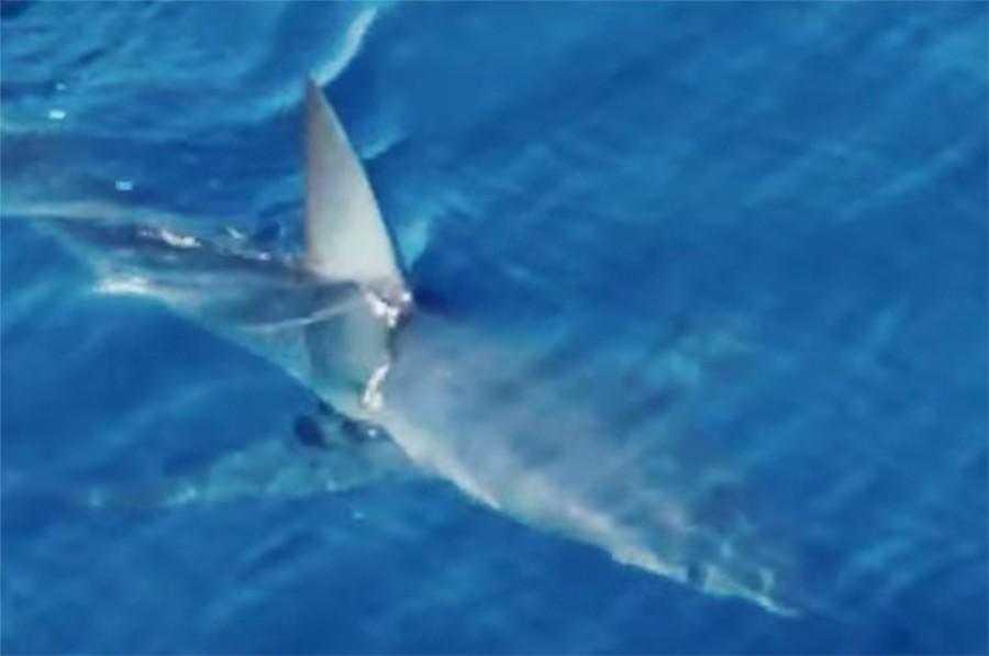 ZASTRAŠUJUĆI NAPAD NA IZLETU Porodica je gledala kako morski pas ženi KIDA RUKE I DOJKU