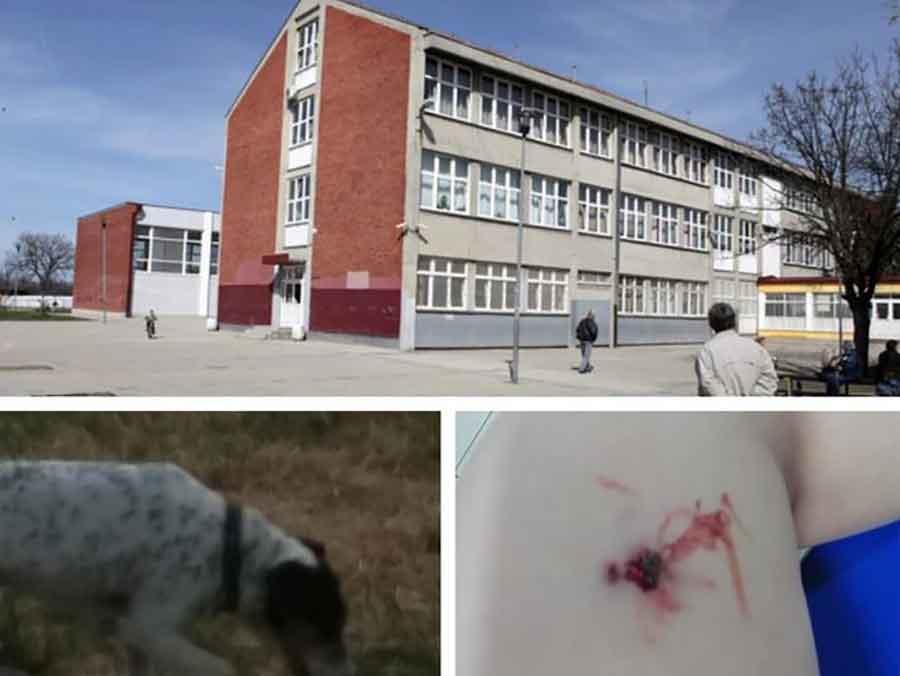 """""""PRIŠAO DA GA POMAZI"""" Pas ujeo dječaka (5), incident se dogodio u KRUGU ŠKOLE"""