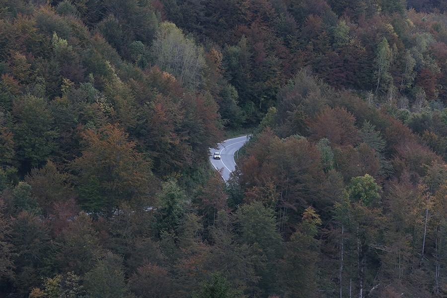 Novac od šume moći će da TROŠE KAKO IM JE VOLJA: Vlada Srpske ide NA RUKU malim opštinama