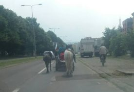 VOZAČI SVIRAJU, PJEŠACI SE KRSTE Konji i magarac izazvali čuđenje na ulicama Banjaluke (FOTO)