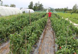 Oluje osiromašile poljoprivrednike u Lijevče polju