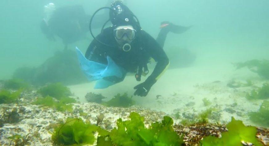 """""""BILO JE VELIKO KAO MOJE TIJELO"""" Džinovsko stvorenje snimljeno nedaleko od engleske obale (FOTO)"""