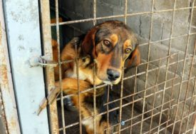 Broj napuštenih životinja se POVEĆAVA LJETI: U azilu brinu o 42 napuštena psa