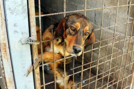 NOVI DOM NA MANJAČI Uskoro gradnja azila za smještaj napuštenih pasa