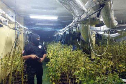 UHAPŠENE ČETIRI OSOBE U Banjaluci pronađena velika laboratorija za PROIZVODNJU MARIHUANE