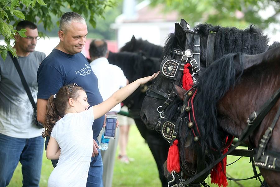 PLEMENITE ŽIVOTINJE OSVOJILE SRCA MALIŠANA Porodica Malić konje uzgaja iz čiste ljubavi (FOTO)