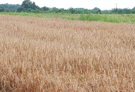 VEĆA POTRAŽNJA ZA ŽITOM Rast cijena soje i pšenice
