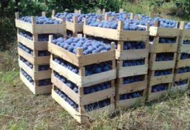 Utvrđeni ostaci pesticida iznad propisanog nivoa: Zabranjen uvoz 400 kilograma šljiva iz Sjeverne Makedonije