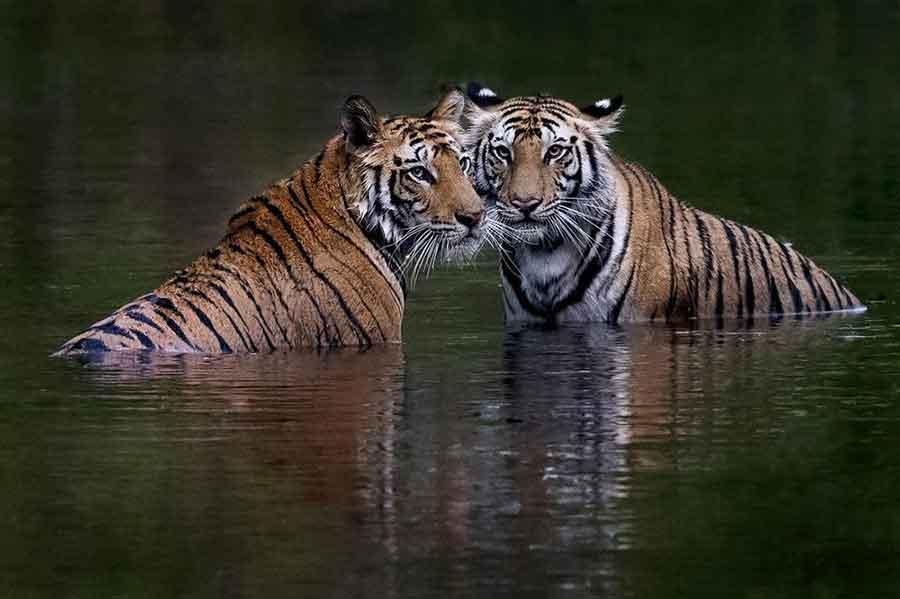 ŽIVOTINJE TRAŽE UTOČIŠTE U KUĆAMA! Raste broj mrtvih u poplavama u Bangladešu, raseljeno preko 200.000 ljudi