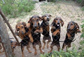 DOBRE VIJESTI Psi i mačke NE PRENOSE korona virus niti obolijevaju od njega